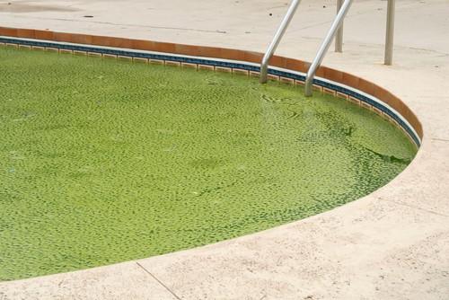 green algae pool